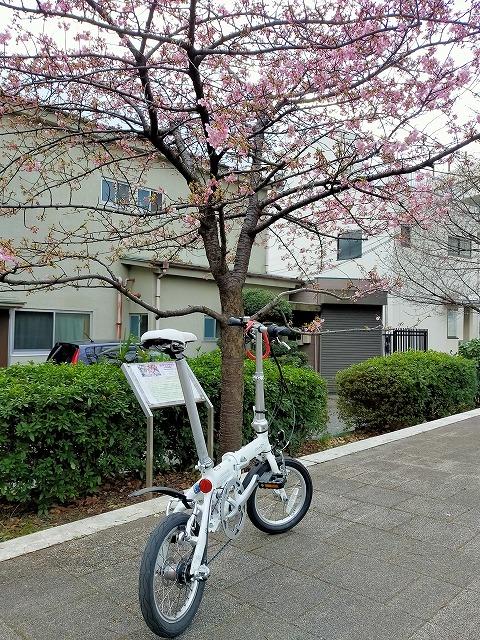 自転車 裏路地 Tokyo Backstreets Bike Tour ツアー サイクリング ポタリング 東京 下町 江戸 町歩き クルーズ ブロンプトン Brompton レンタサイクル 浅草 桜 さくら サクラ 花見