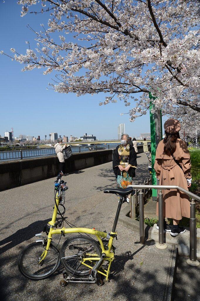 Tokyo Backstreets Bike Tour ツアー サイクリング ポタリング 東京 下町 江戸 町歩き クルーズ 浅草 クルーズ 花見 桜 さくら ソメイヨシノ 屋形船 隅田川 ブロンプトン Brompton